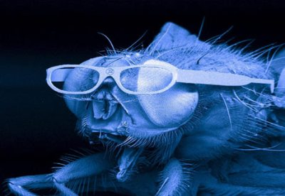 Housefly Gets Glasses Made With Lasers (National Geographic)