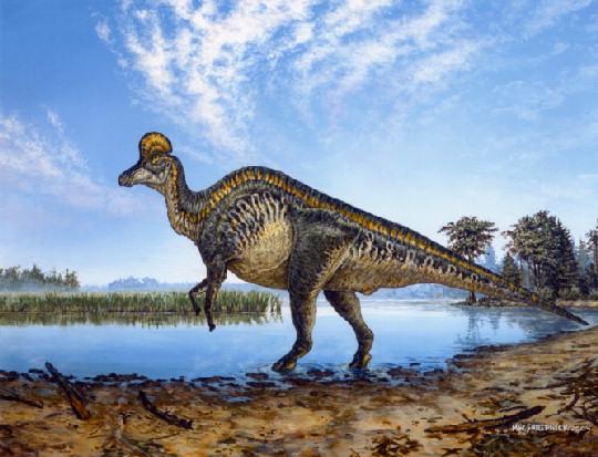 Reconstrucción de un Corythosaurus. Cortesia de Michael Skrepnick.